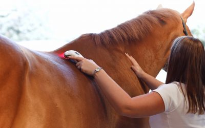 Physiotherapy For The Ex-Racehorse