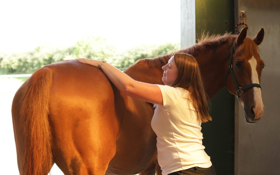 Massaging your horse - an easy 7 step guide